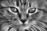 N&B Animaux / B&W Animals