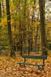 Matinée automnale au parc / Fall morning at the park