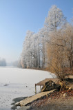 Matinée hivernale au parc / Winter morning at the park