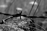 N&B Fil barbelé / B&W Barbed wire