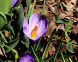 Eve's Spring 2