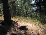 2009 trip to elk