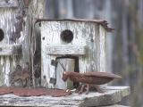 birdhouse bug