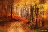 Humeurs saisonnières - Season Moods