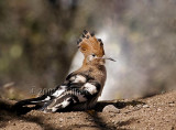 birds_of_southern_africa_1