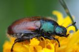 Insecten / Insectes