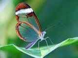 Vlinders / Papillons