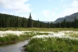 Hatcher Pass 2009
