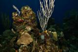Roatan Underwater