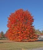 Alabama Fall - 2008