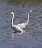 Wheeler Wildlife Refuge - Fiscal Year 2010-11 Season Galleries