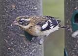 Wheeler Wildlife Refuge - 10/12/2010