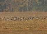 Wheeler Wildlife Refuge - 11/17/2010