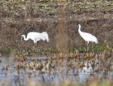 Wheeler Wildlife Refuge - 12/01/2010