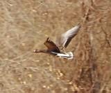Wheeler Wildlife Refuge - 01/22/2011