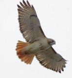 Wheeler Wildlife Refuge - 02/05/2011