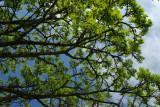 Overhead tree