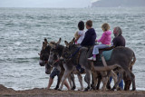 Donkeys at Exmouth - a sort of Vehicle