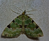 Moth - any idea's what is it?