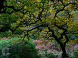 Trees near Badgworthy Water on Exmoor
