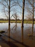 Floods trees