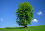 Tree on Exmoor