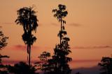 Sunrise, Joe Overstreet Road