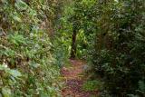 Bosque Guajataca