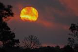 Sunrise at Babcock-Webb
