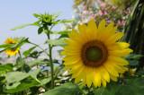 Resplendent in the sun