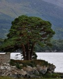 A majestic old tree beside an old castle