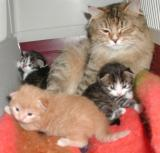 Mom and kittens at 2 weeks
