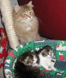 Mom Miisa is watching - in the kitty bed the girls Boogitar and Täplä