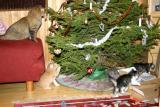 Christmas fun! Mom is watching,  the Chrsistmas tree is in danger!