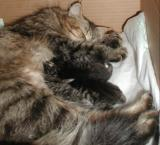 Mom and kittens resting