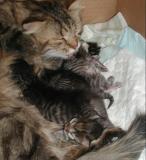 5 days old kittens