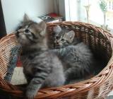 Graziosa and Didi