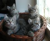kittens12w11.jpg