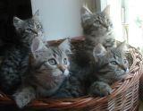 kittens12w12.jpg