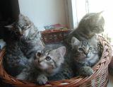 kittens12w14.jpg