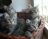 kittens12w9.jpg