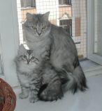 Helmi ja Izzi-mamma