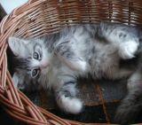 Ain't I cute?