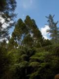Forest in The Coromandel
