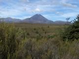 Tongariro N.P.