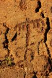 Hawaiian Petroglyphs