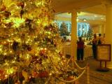 Sheraton Moana Surfrider Christmas tree