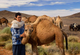 Young Berber boy caring for a young dromedary among camel and goat herd