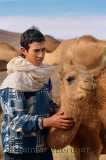 Young Berber teenager caring for a young dromedary among the Arabian camel herd