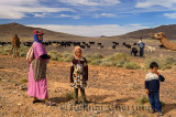 Nomadic Berber family herding Arabian camels and goats in Morocco